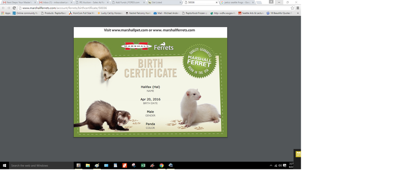 Ferretts for sale.png2